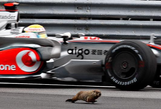 موش در کانادا
